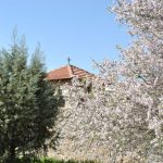 Chapel Spring